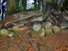 basaltkrater18-10-2013007