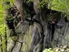 basaltkrater18-10-2013013