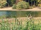 Blick durchs Gras am Brucher See