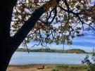 Brucher See vom Wald aus