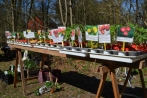pflanzentauschboerse20-04-2013007