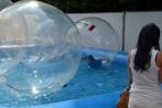 stadtfestgummersbach30-08-2013018