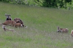 hambach-sophienhoehe28-06-2013010