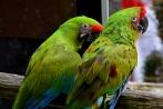 vogelparkherborn14-04-2013002