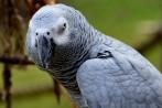 vogelparkherborn14-04-2013003