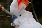 vogelparkherborn14-04-2013004