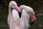vogelparkherborn14-04-2013008