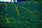kindelsbergwanderung30-05-2013042