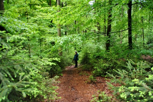 Schmale Wege durch den Wald kennzeichnen den Pfad