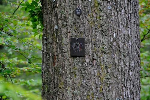 Markierter Baum im Ruhe Forst