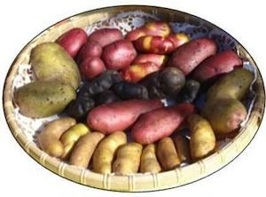 Kartoffelvielfalt - Bild: Bergische Gartenarche