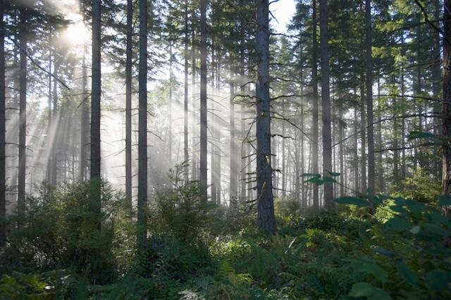 Photo of Private Grundbesitzer stellen Natur unter Schutz