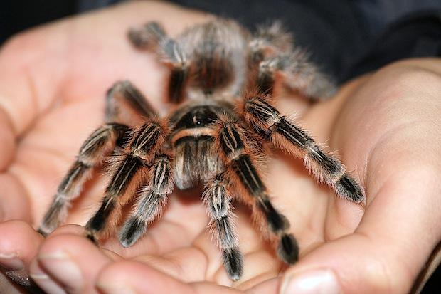 Photo of Größte Spinnen- und Insekten-Ausstellung Deutschlands