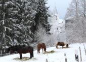 Winter in Lieberhausen – Am Puls der Heimat.
