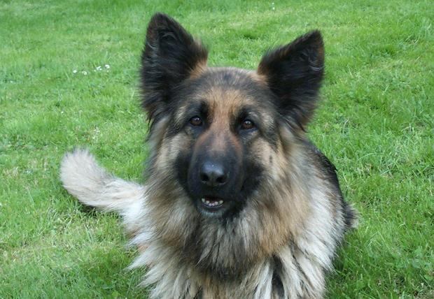 Photo of Für mehr Steuergerechtigkeit: Hundebestandsaufnahme