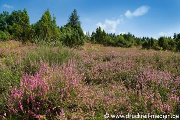 Foto: www.druckreif-medien.de