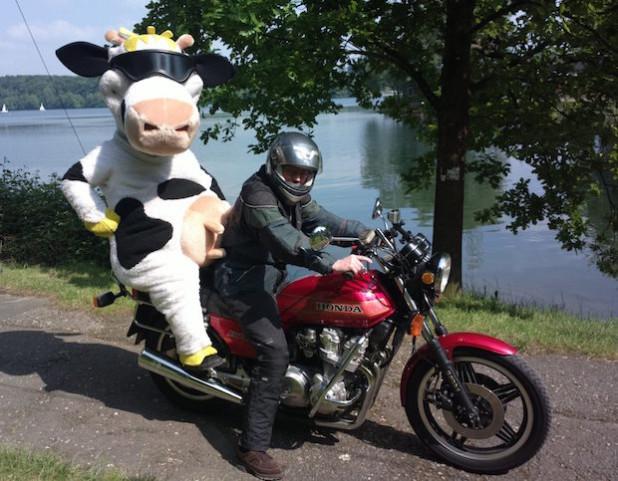 Kuh Lotte genießt die Anfahrt zur Zornigen Ameise stilgemäß auf dem Soziussitz eines Bikers (Foto: LV Milch NRW)