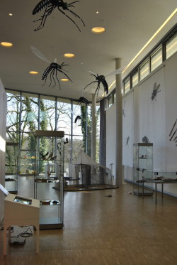Fliegen-Ausstellung