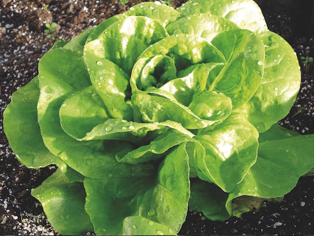 Photo of Tipps für mehr Erntespaß und Pflanzenglück