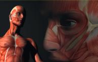 Gummersbach: Anatominsche Ausstellung! Echte Körper – von den Toten lernen