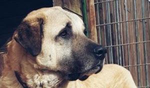 Wipperfürth: Spendenaufruf für Hund Kuba wegen teurer Operation
