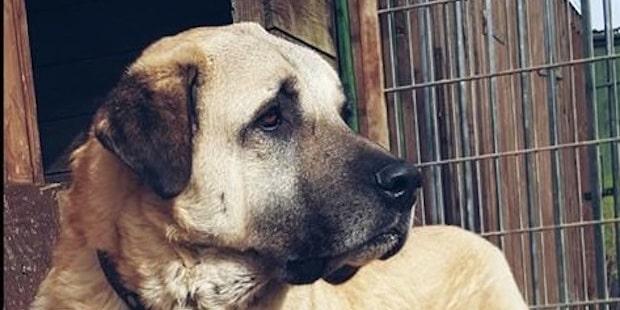 Photo of Wipperfürth: Spendenaufruf für Hund Kuba wegen teurer Operation