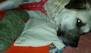 Erfolgreiche Spendenaktion für den Hund Kuba aus dem Tierheim Wipperfürth