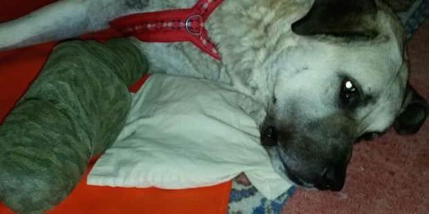 Photo of Erfolgreiche Spendenaktion für den Hund Kuba aus dem Tierheim Wipperfürth