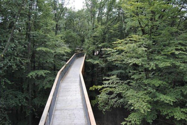 Wege zu den Baumhäusern - Foto: AH/ON