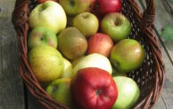 Obstbaumverkauf in Nümbrecht-Lindscheid