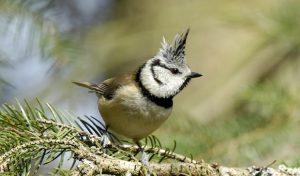 Wo sind all die Vögel hin – wo sind sie geblieben?