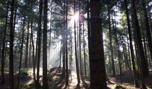 Girl's Day: Mädchen in den Wald!