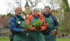 Pflanzentauschbörse: Suche Baumspinat, biete Gartenmohn