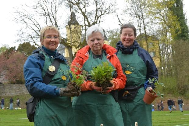 Photo of Pflanzentauschbörse: Suche Baumspinat, biete Gartenmohn