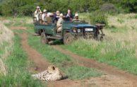 Safaris für jeden Geschmack & Geldbeutel