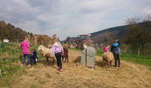 Urlaub daheim – und auf dem Bauernhof