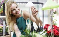 Licht ins Dunkel gebracht – Mit Spezialleuchten gedeihen Topfpflanzen auch in lichtarmen Räumen