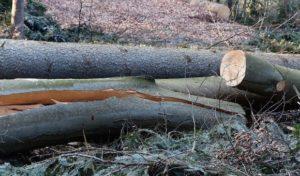 Gummersbach: Rundweg Aggertalsperre wird vorübergehend gesperrt
