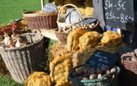 Zum Kartoffelfest – Äepelsfess- ins LVR-Freilichtmuseum Lindlar