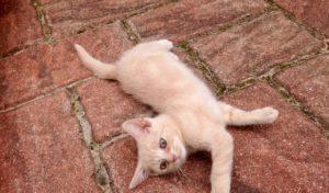 Kastrationspflicht für Katzen im Oberbergischen freut Tierfreunde