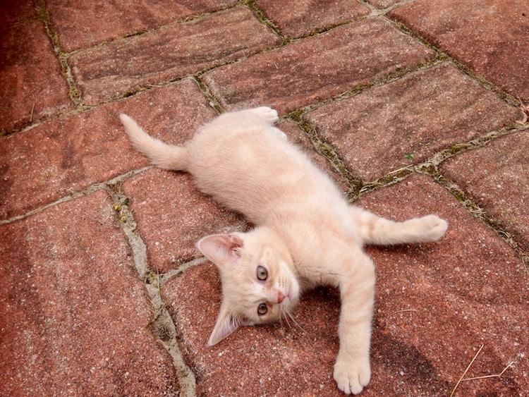 Photo of Kastrationspflicht für Katzen im Oberbergischen freut Tierfreunde