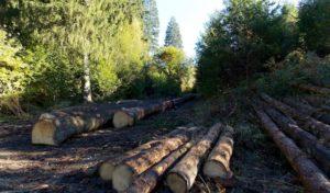 VSB Waldbröl plant Pflanz-Aktion für Jugendliche in den Osterferien