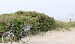 Radeln mit Küstenblick – Ostseeküsten-Radweg von Flensburg nach Lübeck