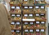 Nümbrechter Kartoffeltage und Erpelsfest