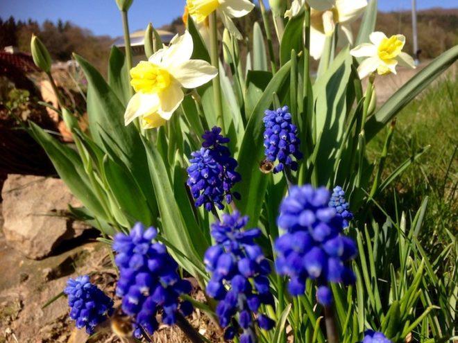 Photo of Herbstzeit ist Pflanzzeit für Blumenzwiebeln wie Tulpen und Narzissen