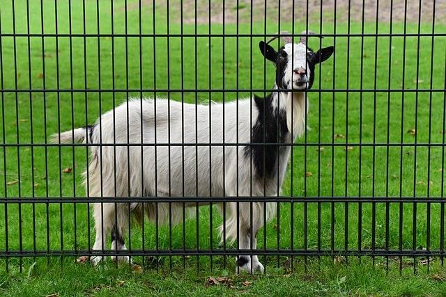 Photo of So verankert man einen Zaun richtig