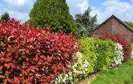 Die perfekten Pflanzen für den eigenen Garten