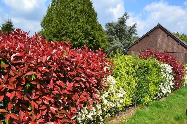 Photo of Die perfekten Pflanzen für den eigenen Garten