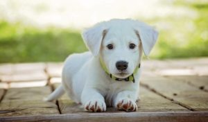 Welche Vorteile bietet eine Hundehaftpflichtversicherung?