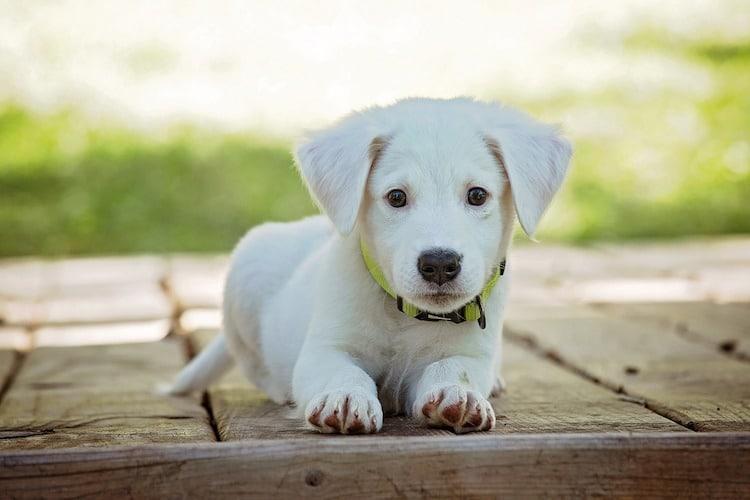 Photo of Welche Vorteile bietet eine Hundehaftpflichtversicherung?